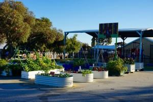 Dalmain Urban Garden (DUG)